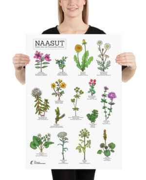 Plants from the  Greenlandic kitchen poster