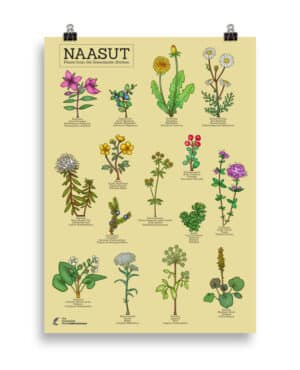Plants from the  Greenlandic kitchen poster- Yellow
