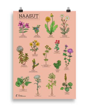 Plants from the  Greenlandic kitchen poster- Pink
