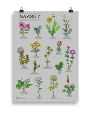 Plants from the  Greenlandic kitchen poster- Grey