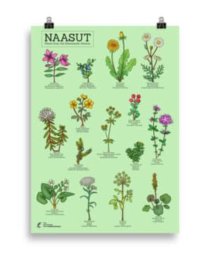 Plants from the  Greenlandic kitchen poster- Green