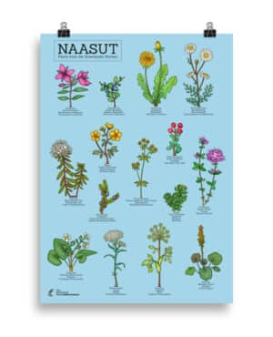 Plants from the  Greenlandic kitchen poster- Blue